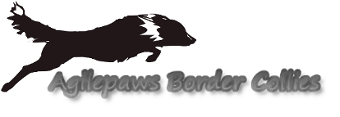 Agilepaws Border Collies
